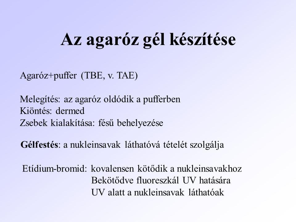 Az agaróz gél készítése Agaróz+puffer (TBE, v. TAE) Melegítés: az agaróz oldódik a pufferben Kiöntés: dermed Zsebek kialakítása: fésű behelyezése Gélf