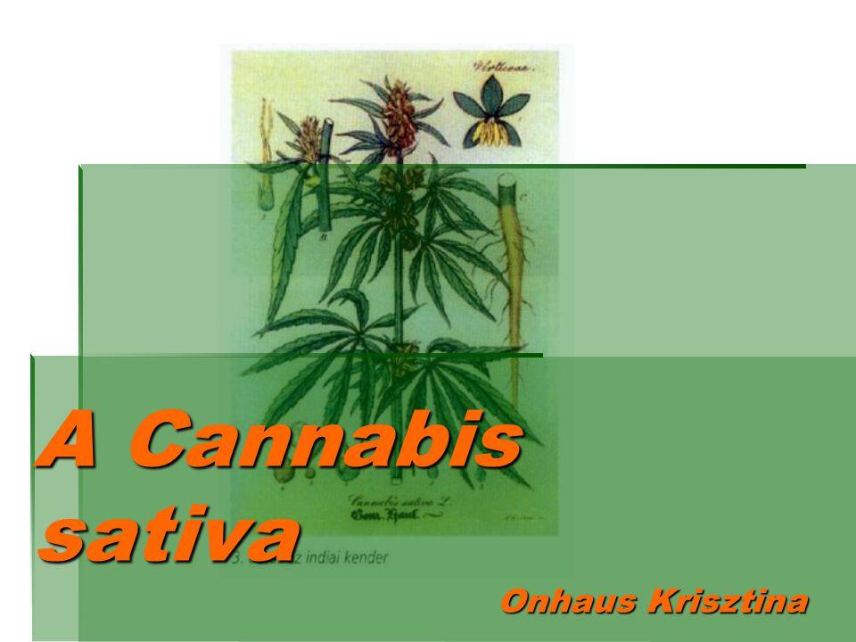 A Cannabis sativa Onhaus Krisztina