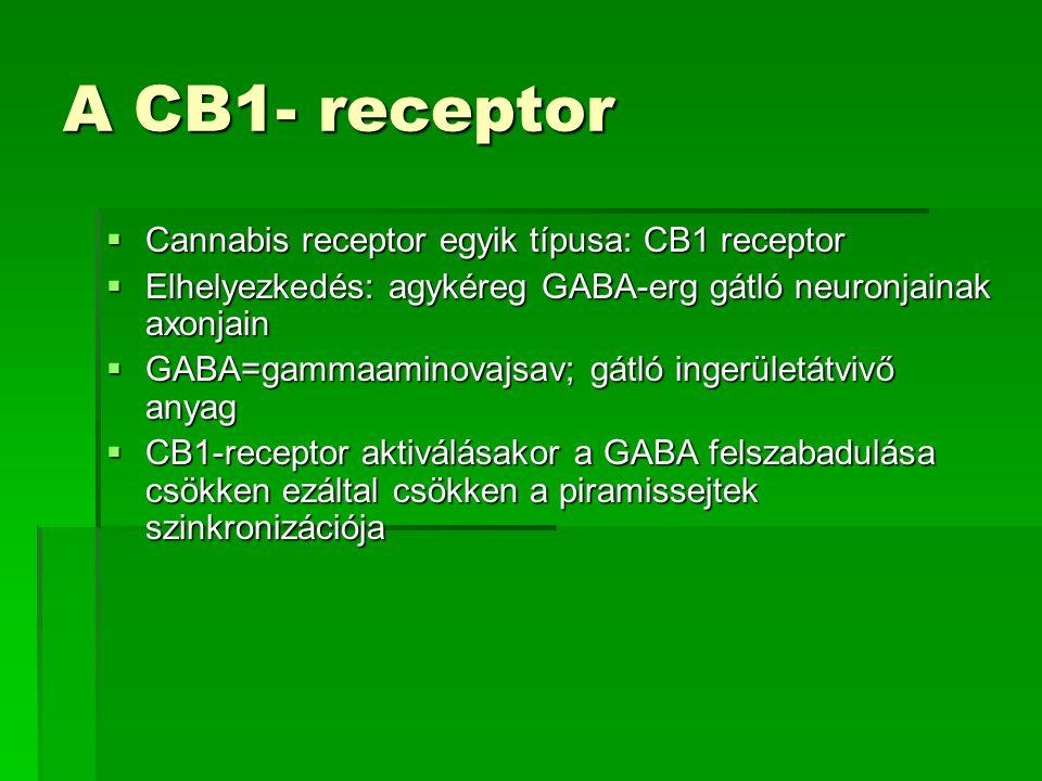 A CB1- receptor  Cannabis receptor egyik típusa: CB1 receptor  Elhelyezkedés: agykéreg GABA-erg gátló neuronjainak axonjain  GABA=gammaaminovajsav;