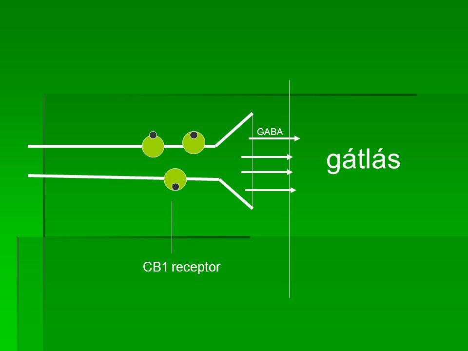 GABA gátlás CB1 receptor