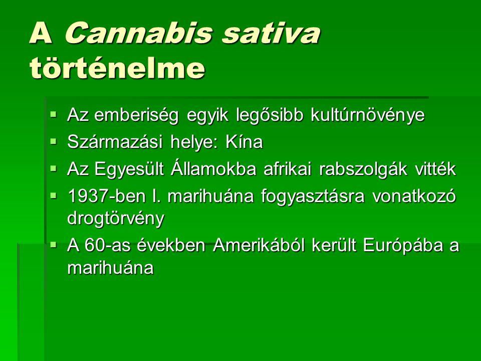 A Cannabis sativa hatóanyaga  A Cannabis sativa lágy szárú, évelő, kétlaki növény.