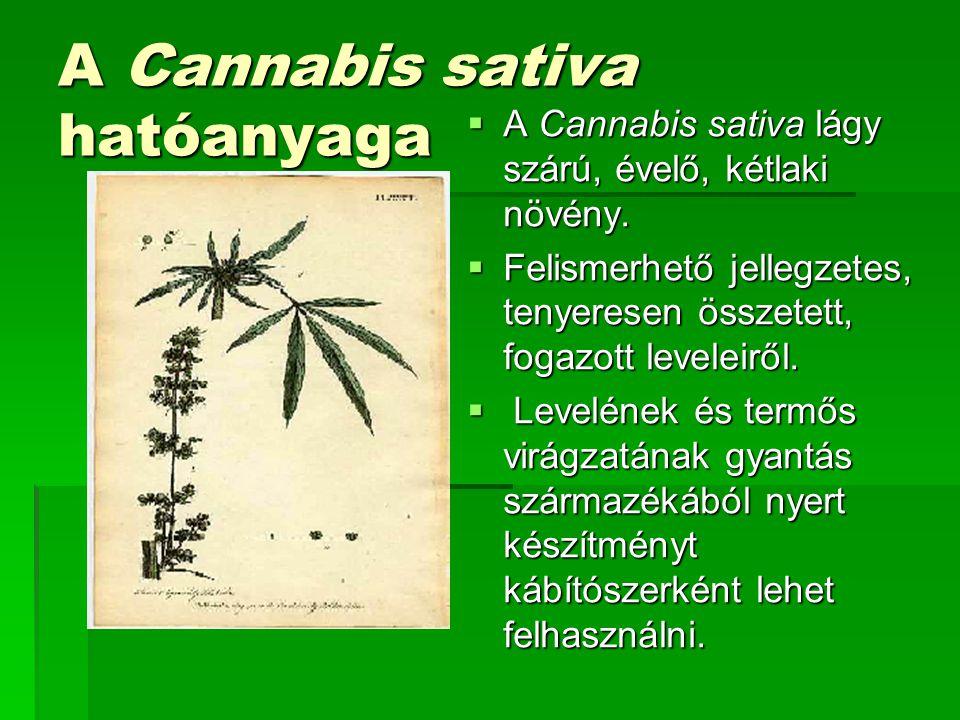 A Cannabis sativa hatóanyaga  A Cannabis sativa lágy szárú, évelő, kétlaki növény.  Felismerhető jellegzetes, tenyeresen összetett, fogazott levelei