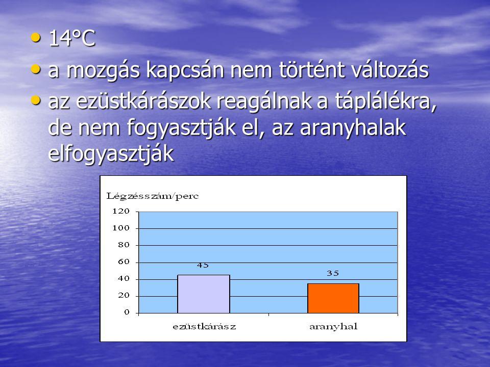 14°C 14°C a mozgás kapcsán nem történt változás a mozgás kapcsán nem történt változás az ezüstkárászok reagálnak a táplálékra, de nem fogyasztják el, az aranyhalak elfogyasztják az ezüstkárászok reagálnak a táplálékra, de nem fogyasztják el, az aranyhalak elfogyasztják
