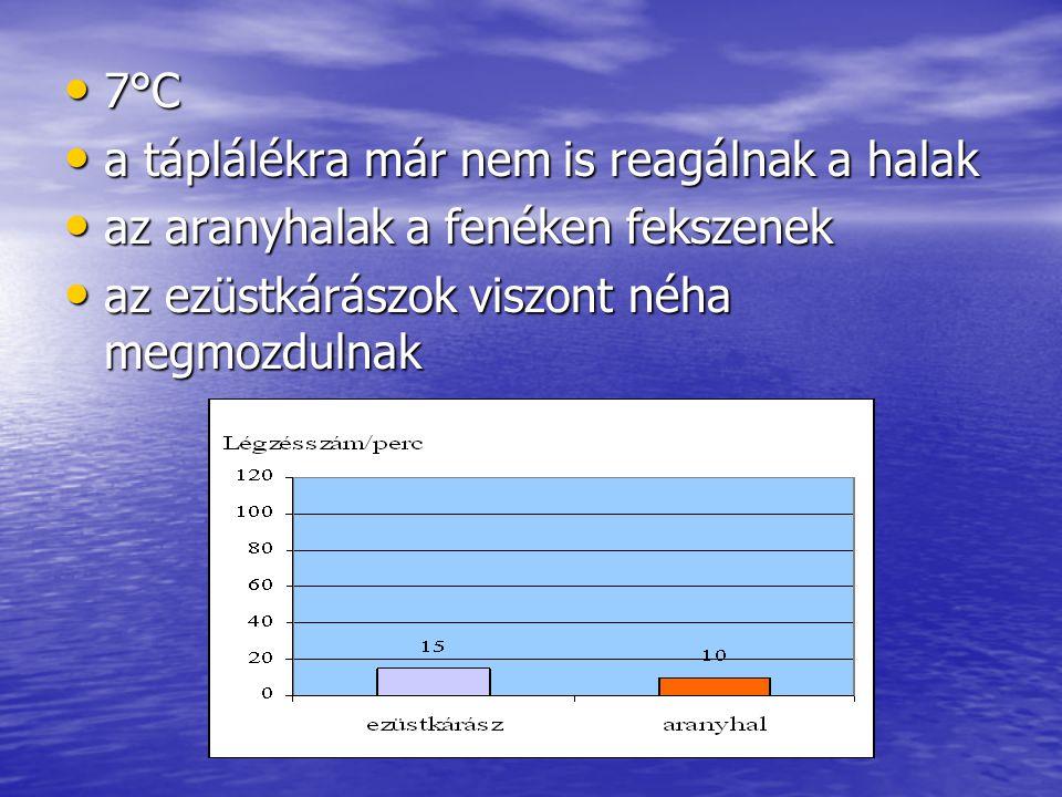 7°C 7°C a táplálékra már nem is reagálnak a halak a táplálékra már nem is reagálnak a halak az aranyhalak a fenéken fekszenek az aranyhalak a fenéken fekszenek az ezüstkárászok viszont néha megmozdulnak az ezüstkárászok viszont néha megmozdulnak