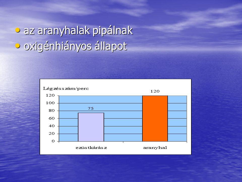 az aranyhalak pipálnak az aranyhalak pipálnak oxigénhiányos állapot oxigénhiányos állapot
