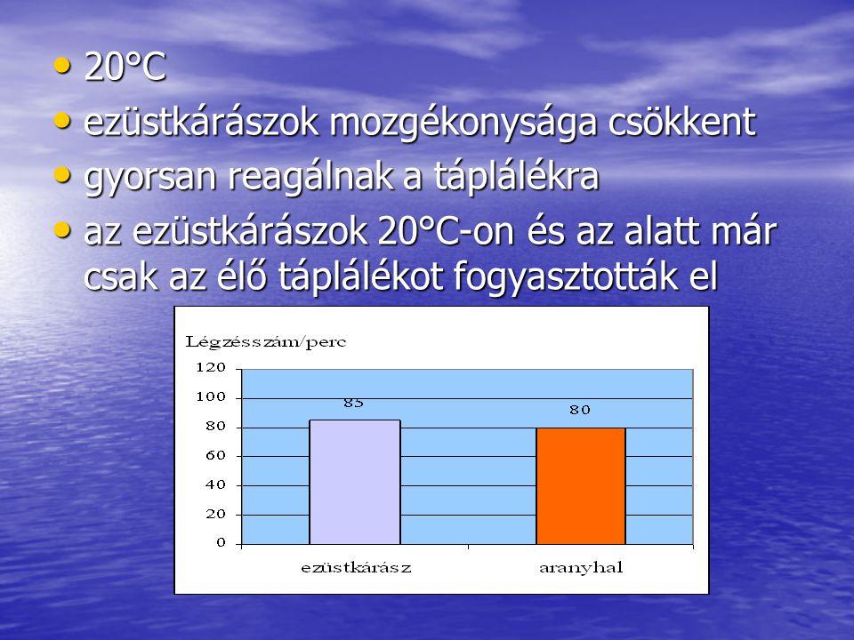 20°C 20°C ezüstkárászok mozgékonysága csökkent ezüstkárászok mozgékonysága csökkent gyorsan reagálnak a táplálékra gyorsan reagálnak a táplálékra az ezüstkárászok 20°C-on és az alatt már csak az élő táplálékot fogyasztották el az ezüstkárászok 20°C-on és az alatt már csak az élő táplálékot fogyasztották el
