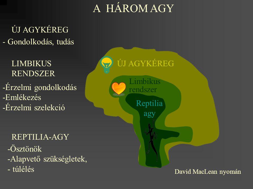 Reptilia agy Limbikus rendszer ÚJ AGYKÉREG A HÁROM AGY ÚJ AGYKÉREG - Gondolkodás, tudás LIMBIKUS RENDSZER -Érzelmi gondolkodás -Emlékezés -Érzelmi sze
