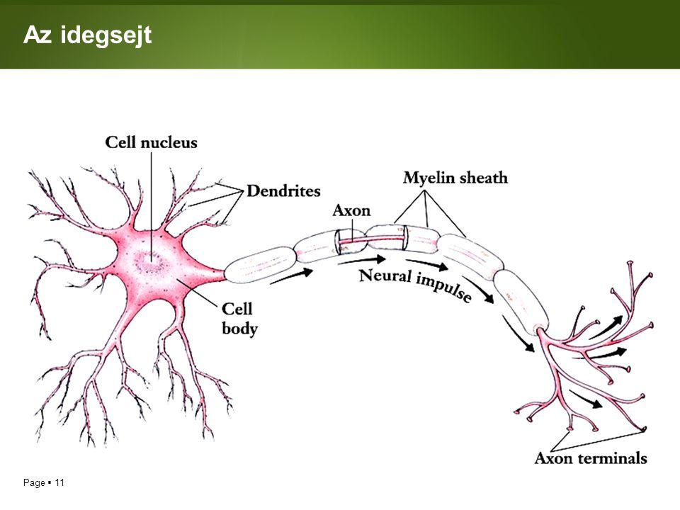 Page  11 Az idegsejt