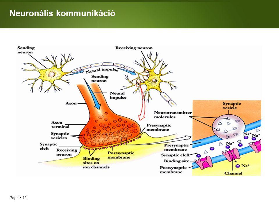 Page  12 Neuronális kommunikáció