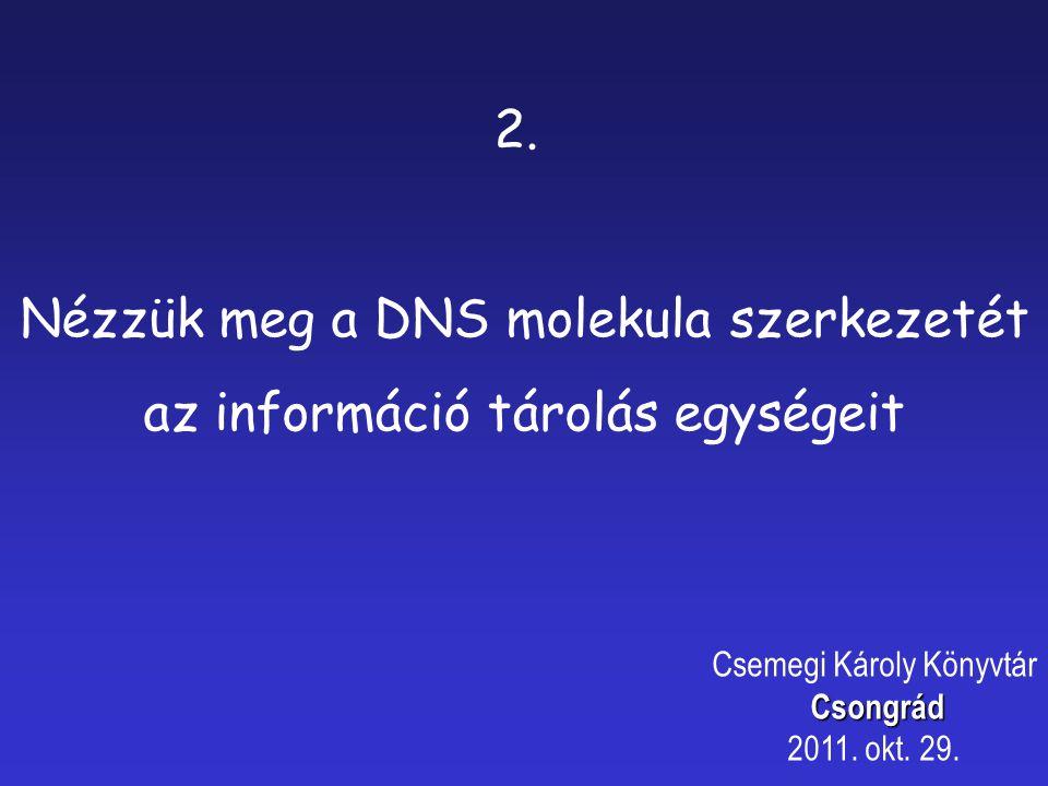 2. Nézzük meg a DNS molekula szerkezetét az információ tárolás egységeit Csemegi Károly KönyvtárCsongrád 2011. okt. 29.