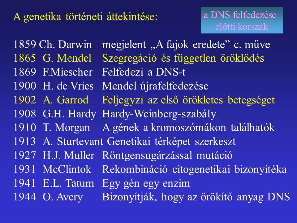 Kódszótár (kód - kodon) DNS mRNS ( t RNS) Degeneráltság (egy aminósavat több kodon is meghatároz) Lötyögés (kód – kodon –antikodon) (ezek számbeli eltérése) Minimális összhiba!