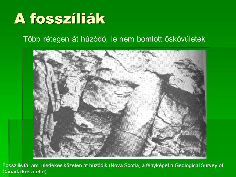 A fosszíliák Több rétegen át húzódó, le nem bomlott őskövületek Fosszilis fa, ami üledékes kőzeten át húzódik (Nova Scotia, a fényképet a Geological Survey of Canada készítette)
