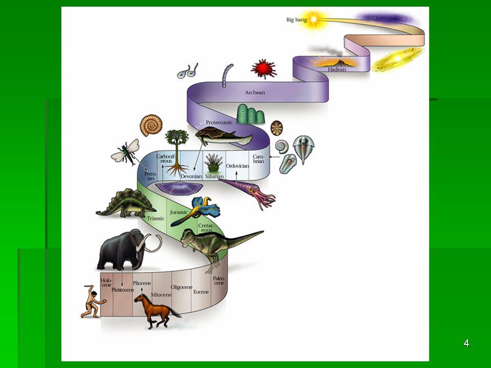 5 Az evolúció filozófiai mondanivalója  A halál egyfajta teremtő erő benne: a gyengébbek elhullásával az erősebb fajok élnek túl és jutnak tovább.