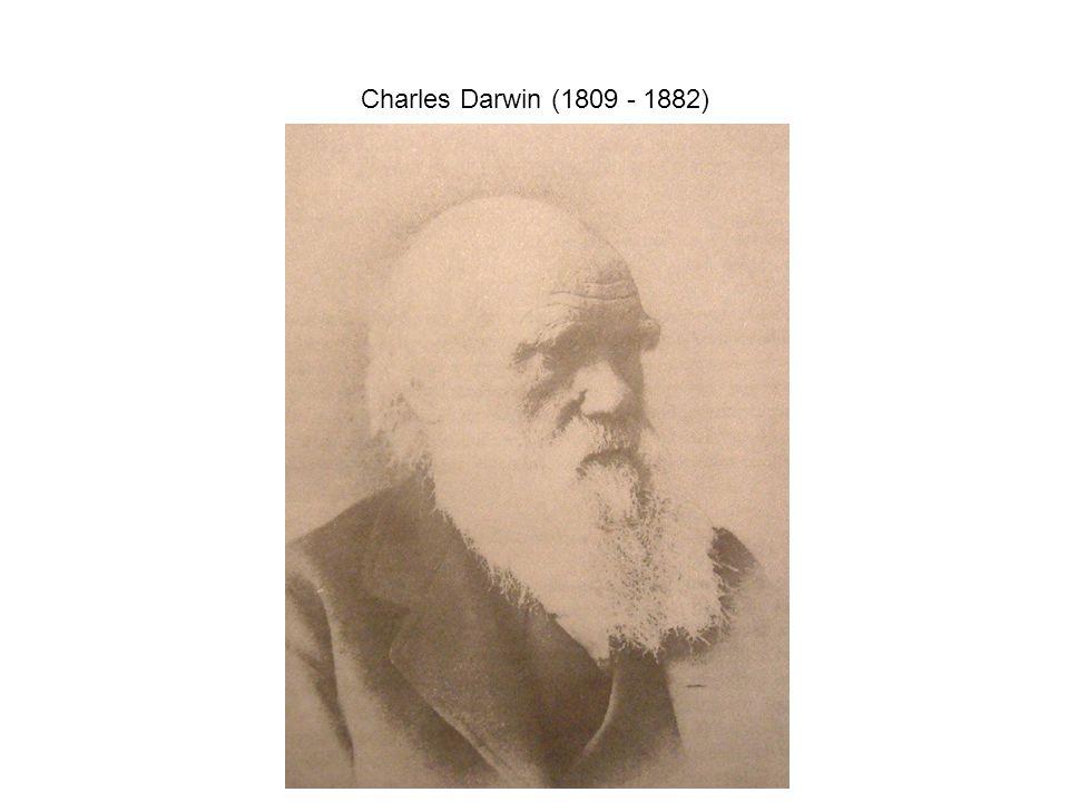 """""""Fény derül majd az ember eredetére és történetére is. Darwin, C."""