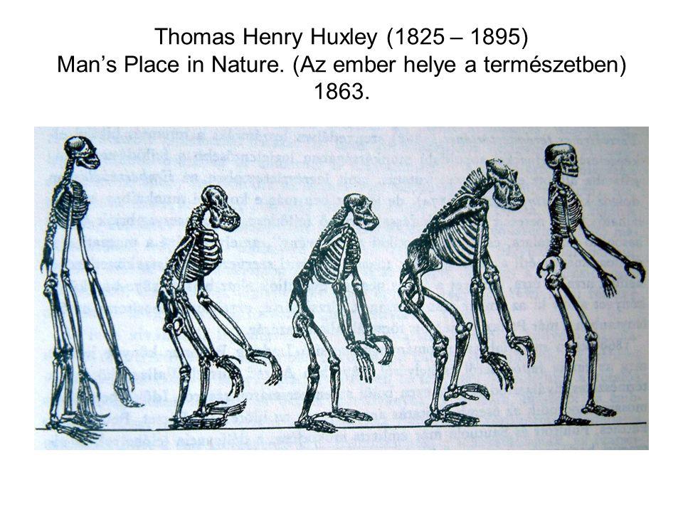 Thomas Henry Huxley (1825 – 1895) Man's Place in Nature. (Az ember helye a természetben) 1863.