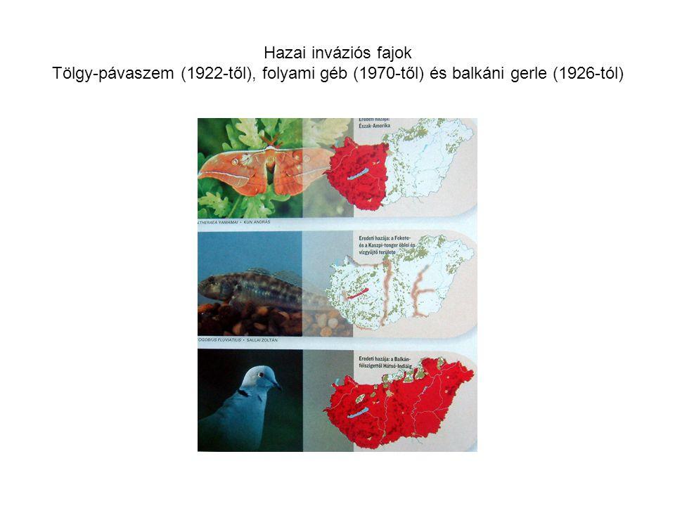Hazai inváziós fajok Tölgy-pávaszem (1922-től), folyami géb (1970-től) és balkáni gerle (1926-tól)