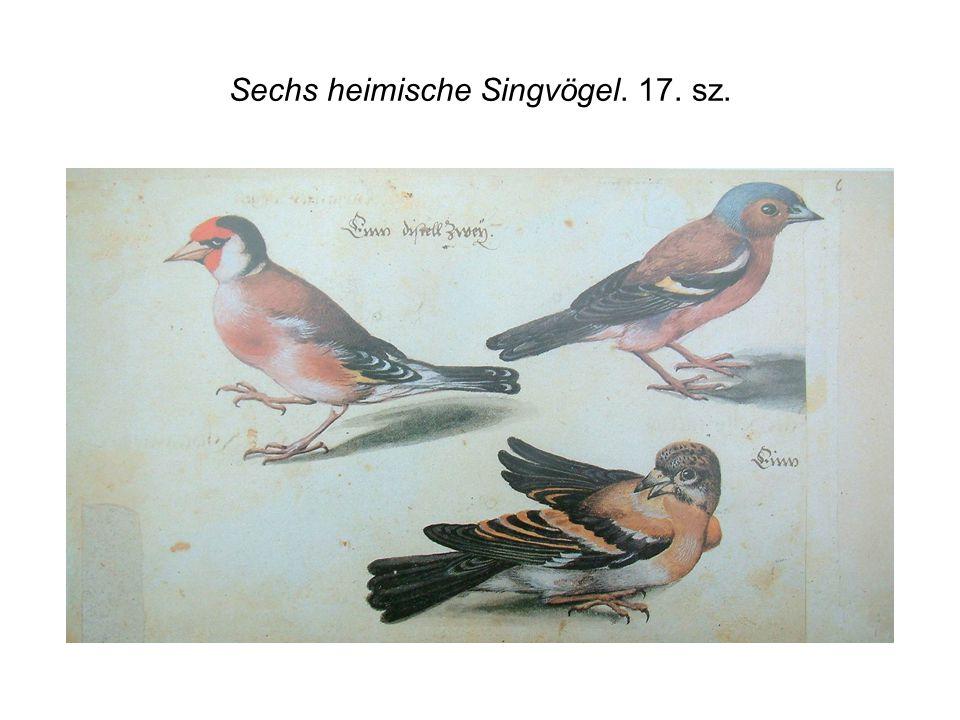 Sechs heimische Singvögel. 17. sz.