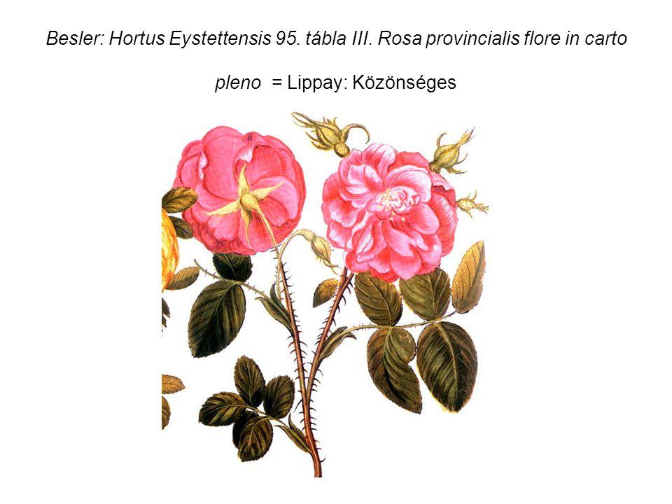 Besler: Hortus Eystettensis 95. tábla III.