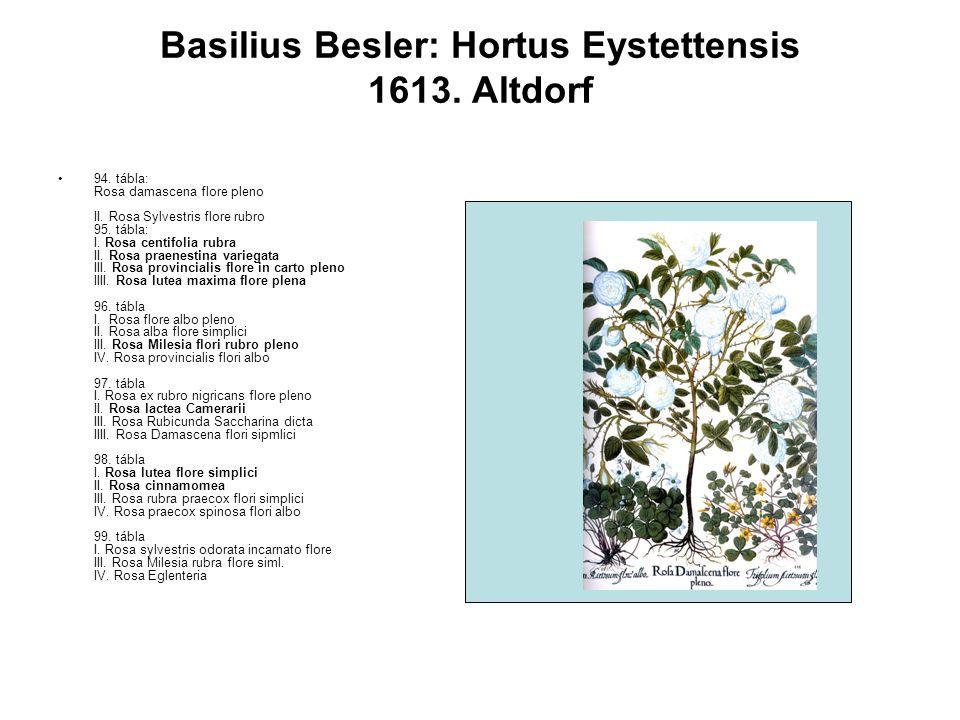 94. tábla: Rosa damascena flore pleno II. Rosa Sylvestris flore rubro 95.
