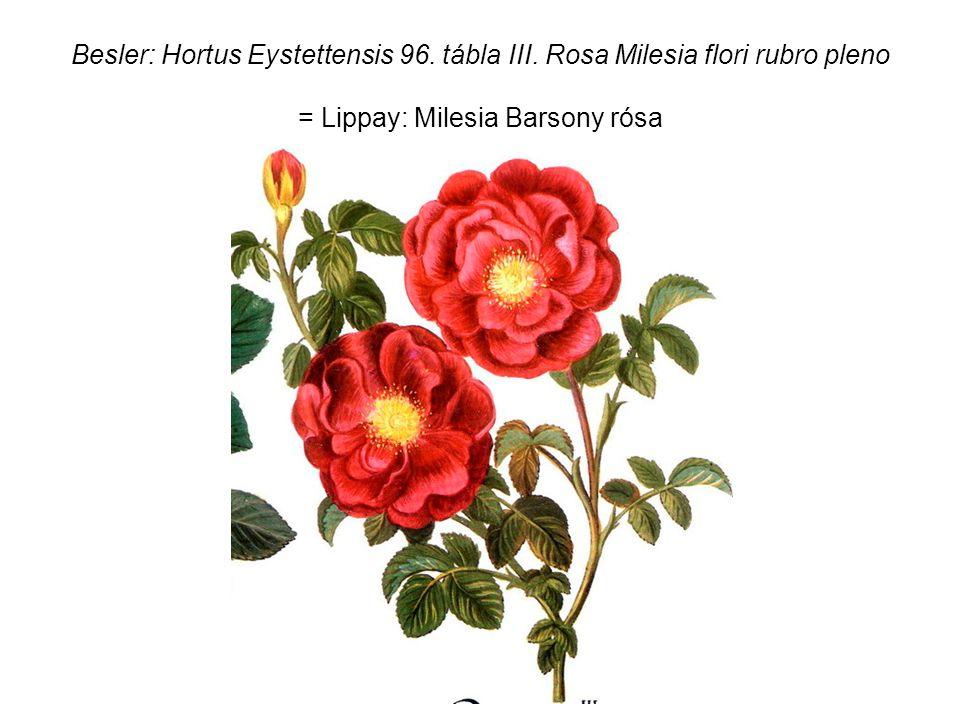 Besler: Hortus Eystettensis 96. tábla III.