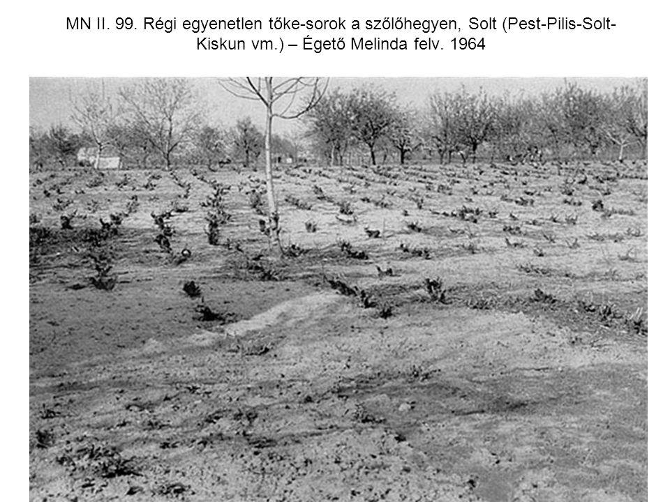 MN II. 99. Régi egyenetlen tőke-sorok a szőlőhegyen, Solt (Pest-Pilis-Solt- Kiskun vm.) – Égető Melinda felv. 1964