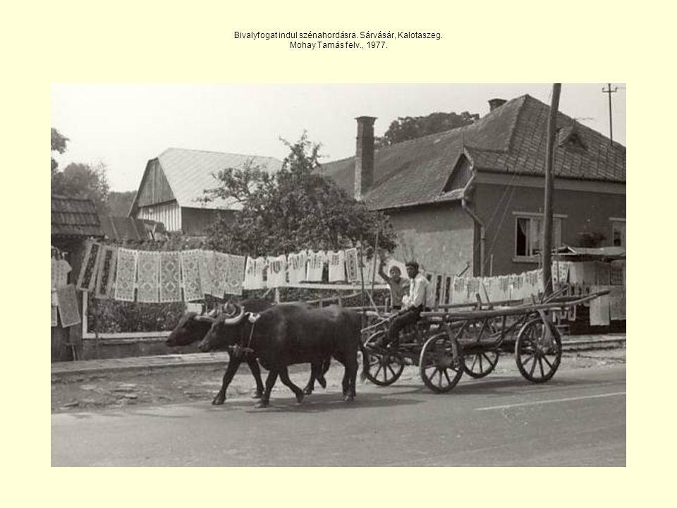 Bivalyfogat indul szénahordásra. Sárvásár, Kalotaszeg. Mohay Tamás felv., 1977.