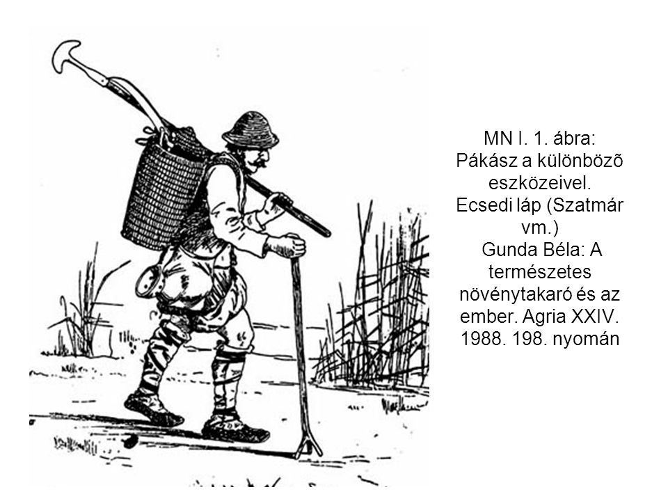 MN I. 1. ábra: Pákász a különbözõ eszközeivel. Ecsedi láp (Szatmár vm.) Gunda Béla: A természetes növénytakaró és az ember. Agria XXIV. 1988. 198. nyo