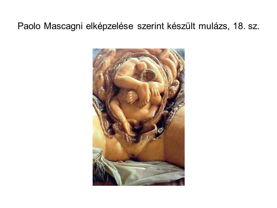 Paolo Mascagni elképzelése szerint készült mulázs, 18. sz.