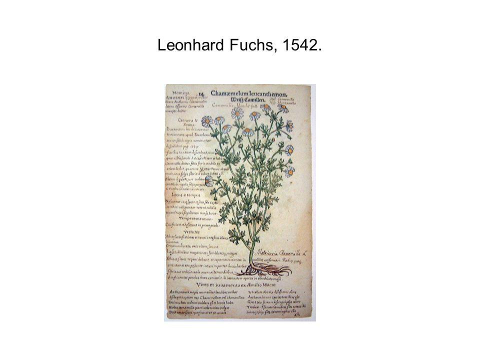 Leonhard Fuchs, 1542.