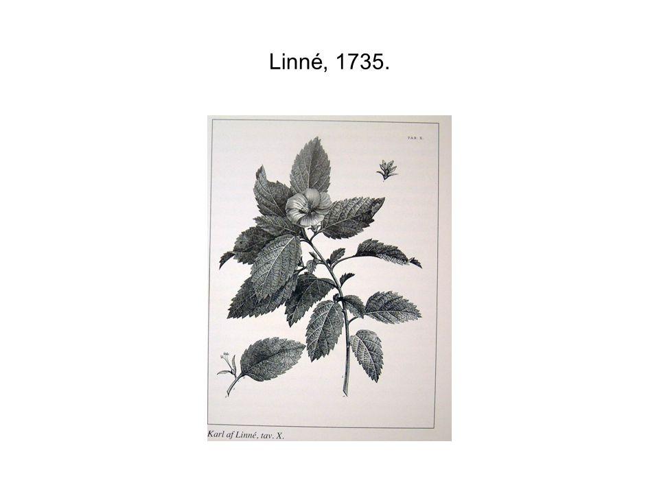 Linné, 1735.