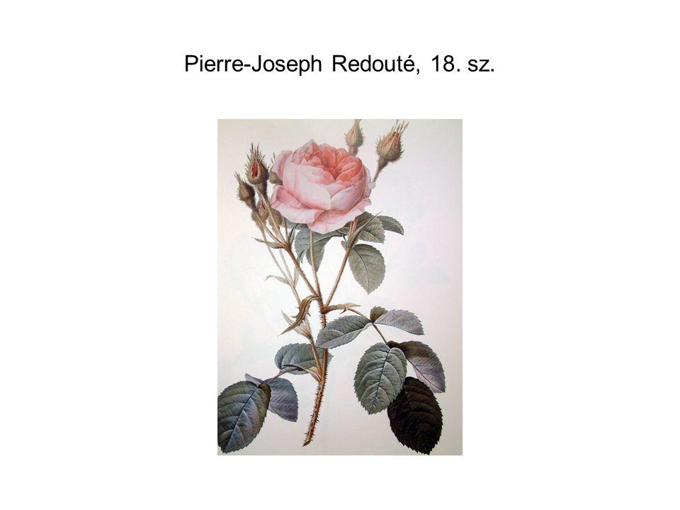 Pierre-Joseph Redouté, 18. sz.