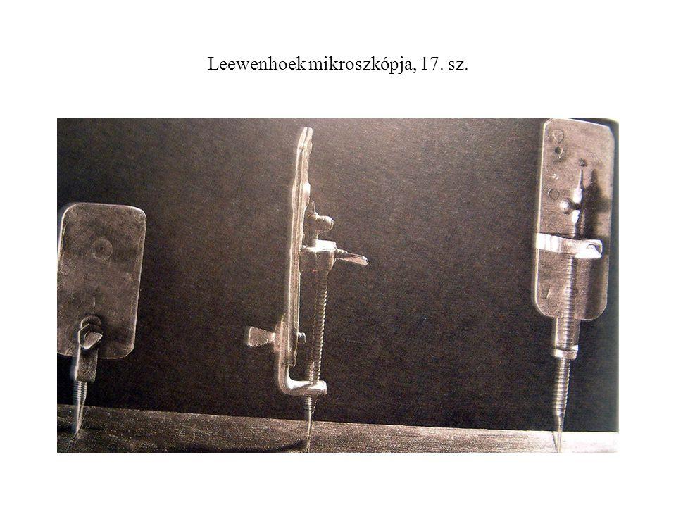 Leewenhoek mikroszkópja, 17. sz.