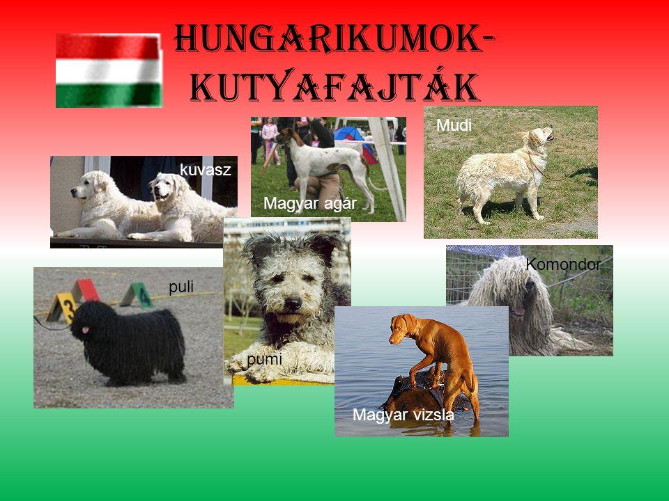 Hungarikumok- kutyafajták kuvasz puli Magyar agár Mudi pumi Magyar vizsla Komondor