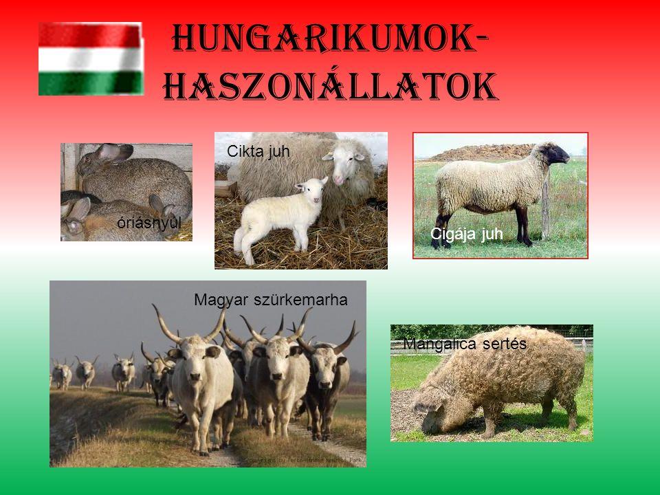 Hungarikumok- haszonállatok óriásnyúl Cikta juh Cigája juh Magyar szürkemarha Mangalica sertés