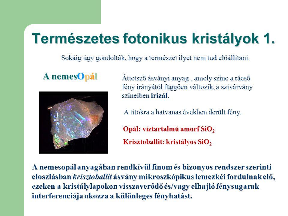 Természetes fotonikus kristályok 2.