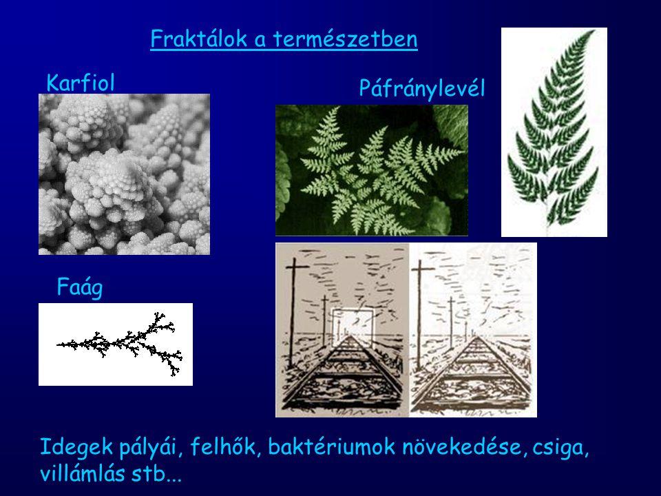 Fraktálok a természetben Karfiol Páfránylevél Faág Idegek pályái, felhők, baktériumok növekedése, csiga, villámlás stb...