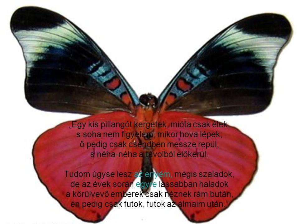 """"""" A boldogság egy olyan pillangó, melyet ha kergetünk, soha nem kaphatunk el. De ha leülünk csendben, leereszkedik ránk."""""""