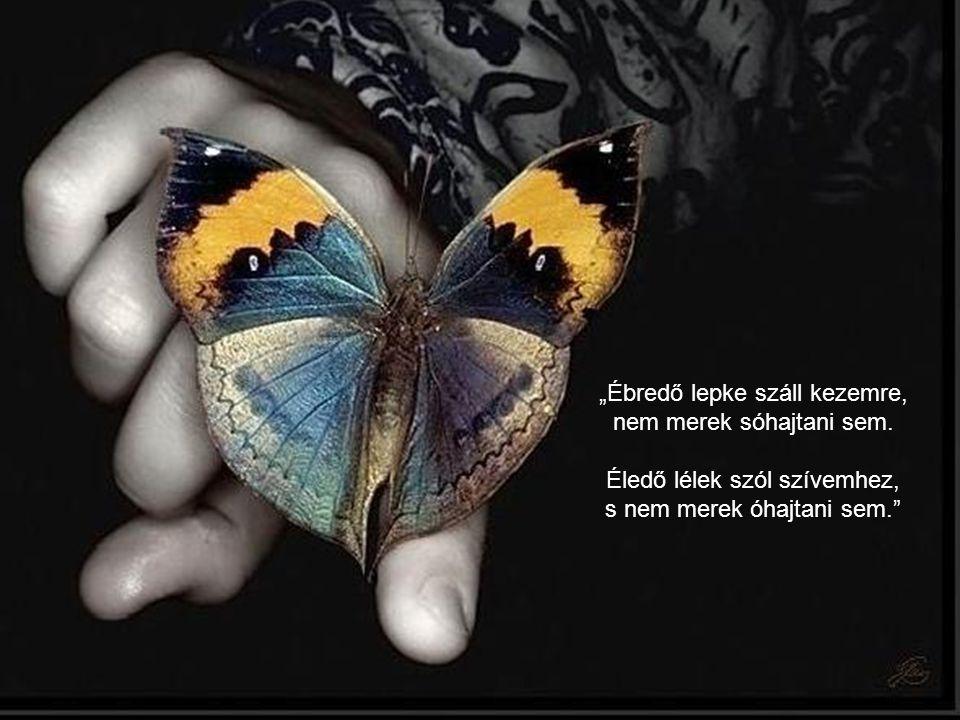 """""""A sok kicsi pillangó a sok kis jóság hírét hordozza magával. És vannak aztán szép, nagy, tarka szárnyú pillangók: ezek a ritka, nagyon jó cselekedete"""