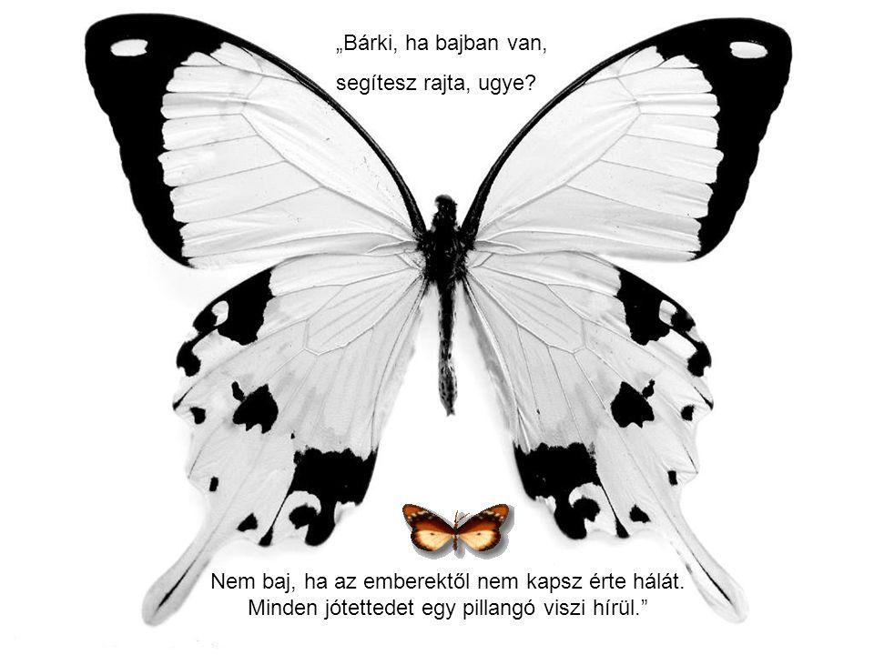 """""""Vergődő pillangó voltam tenyeredben, nem vagyunk már más csak egy halk idézet!"""""""