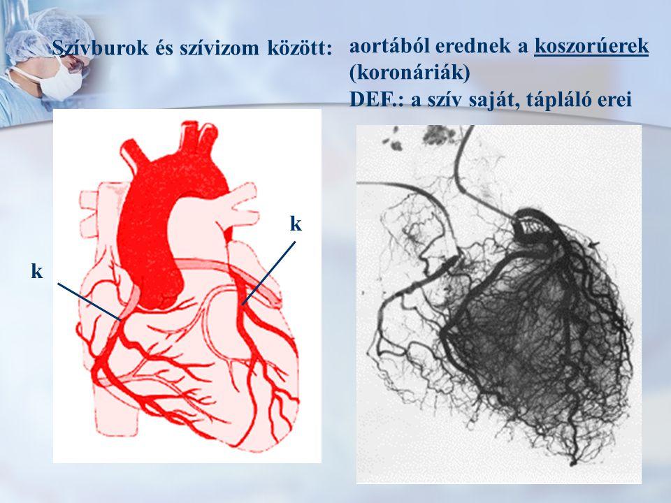Szívburok és szívizom között: aortából erednek a koszorúerek (koronáriák) DEF.: a szív saját, tápláló erei k k