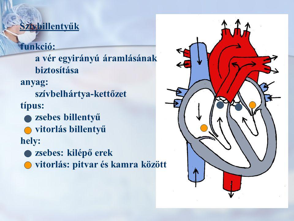 Szívbillentyűk funkció: a vér egyirányú áramlásának biztosítása anyag: szívbelhártya-kettőzet típus: zsebes billentyű vitorlás billentyű hely: zsebes: