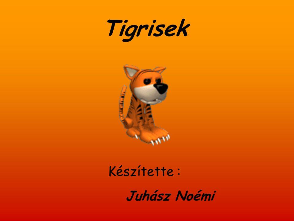 Tartalom  Rendszertani besorolás  Elterjedése  Alfajai  Megjelenése  Életmódja  Szaporodása  Fehér tigrisek  Érdekességek  Tigrisek temploma (Tiger Temple)