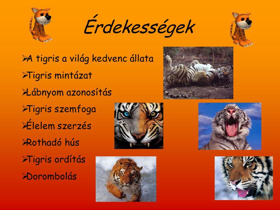 Érdekességek  A tigris a világ kedvenc állata  Tigris mintázat  Lábnyom azonosítás  Tigris szemfoga  Élelem szerzés  Rothadó hús  Tigris ordítá