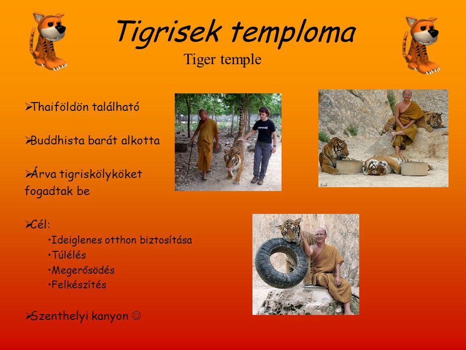 Tigrisek temploma  Thaiföldön található  Buddhista barát alkotta  Árva tigriskölyköket fogadtak be  Cél: Ideiglenes otthon biztosítása Túlélés Meg