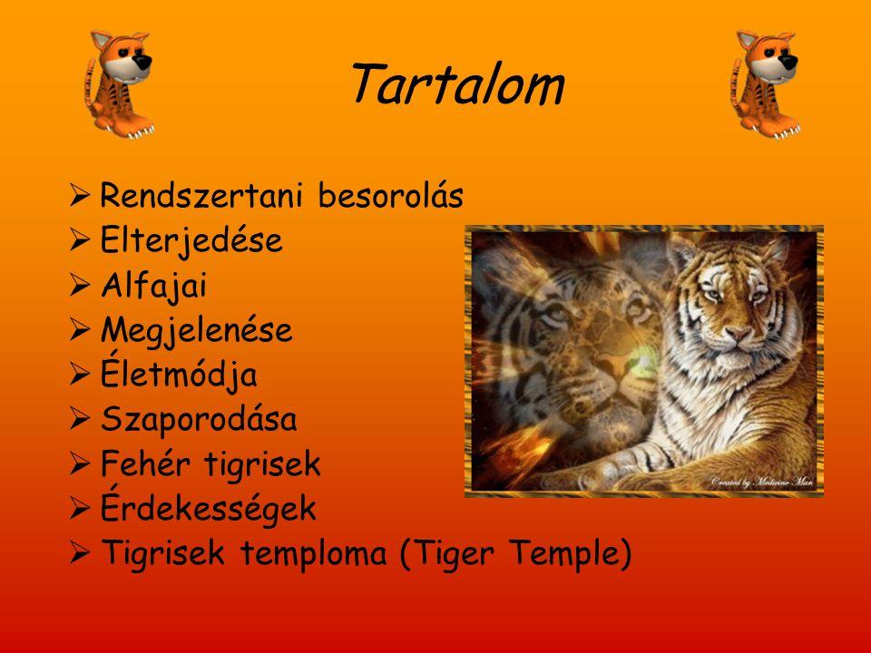 Tartalom  Rendszertani besorolás  Elterjedése  Alfajai  Megjelenése  Életmódja  Szaporodása  Fehér tigrisek  Érdekességek  Tigrisek temploma