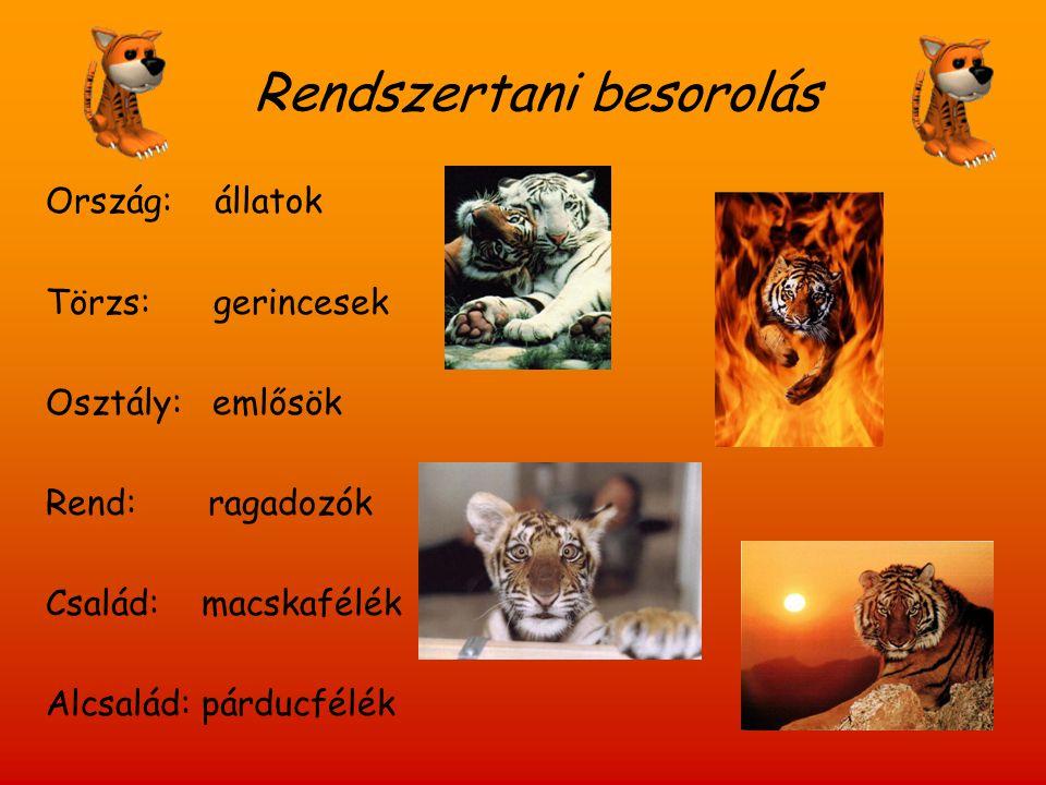 Rendszertani besorolás Ország: állatok Törzs: gerincesek Osztály: emlősök Rend: ragadozók Család: macskafélék Alcsalád: párducfélék