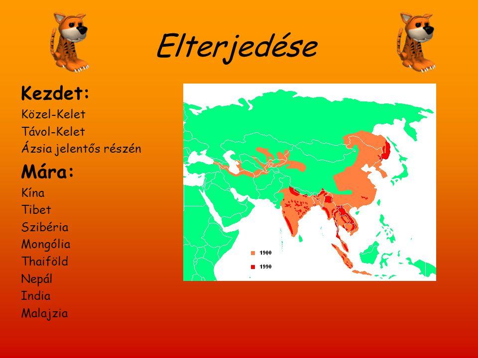 Alfajai Bali tigris Bengáli tigris Jávai tigrisKaszpi tigris Szibériai tigris Indokínai tigris Szumátrai tigris Dél-kínai tigris Maláj tigris