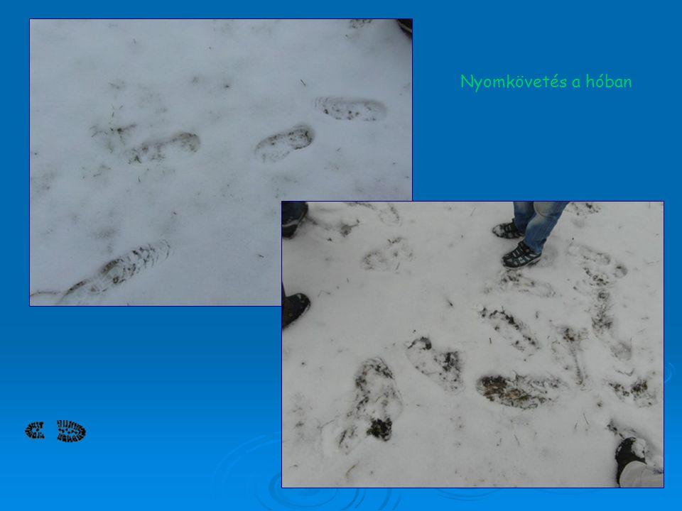 Nyomkövetés a hóban