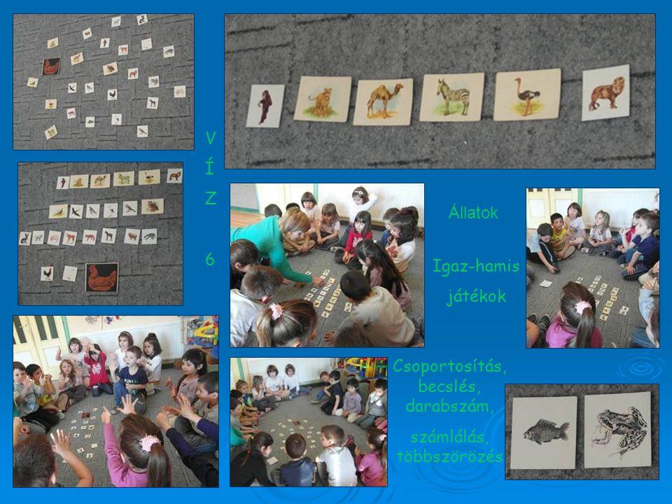 VÍZ6VÍZ6 Állatok Csoportosítás, becslés, darabszám, számlálás, többszörözés Igaz-hamis játékok