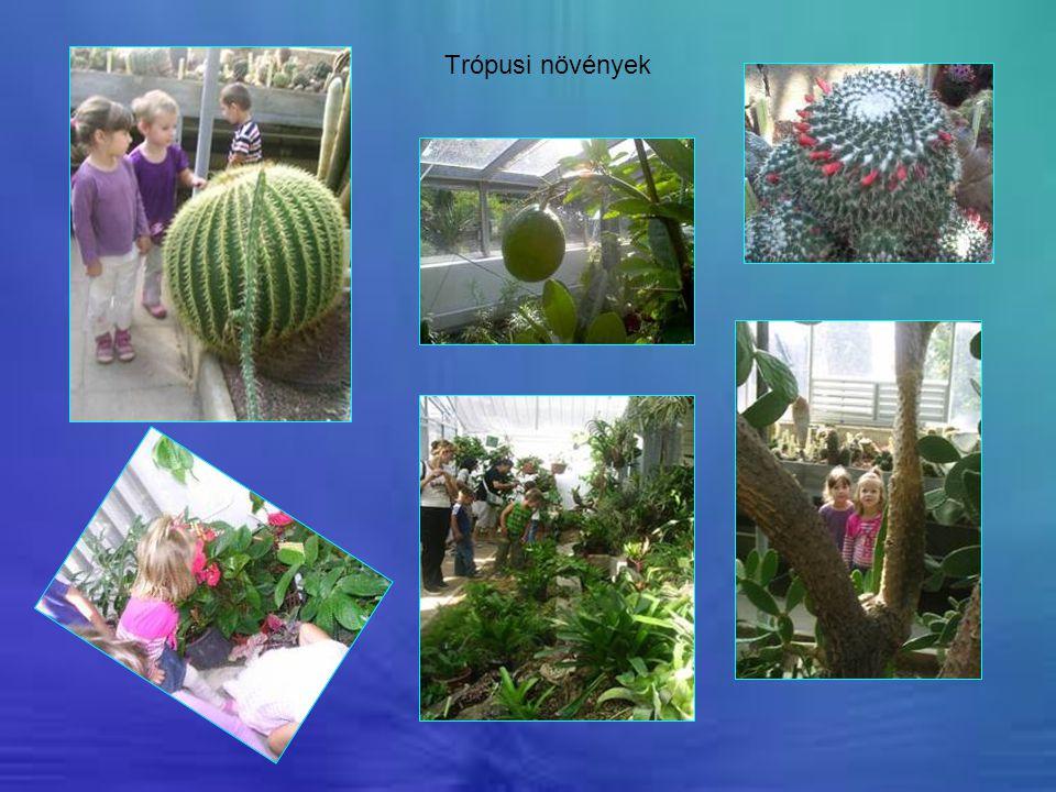 Trópusi növények